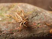 Animals Exotic animals, price 3.99 €, Photo