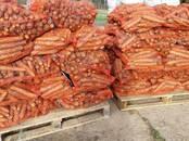 Foodstuffs,  Vegetables Carrots, price 0.15 €/kg., Photo