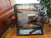 Grauzēji Būri un aksesuāri, cena 84 €, Foto
