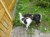 Dogs, puppies Unknown breed, price 150 €, Photo