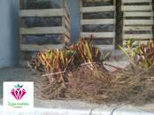 Сельское хозяйство Семена и рассада, цена 0.16 €, Фото