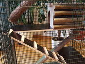 Rodents Cages and accesories, price 69 €, Photo