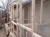 Птицеводство Оборудование для птичьих ферм, цена 42 €, Фото