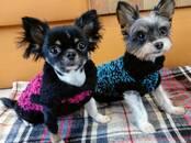 Suņi, kucēni Aksesuāri, cena 10 €, Foto