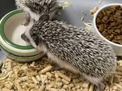 Животные Экзотические животные, цена 255 €, Фото