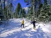 Спорт, активный отдых Беговые лыжи, цена 60 €, Фото