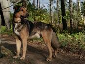 Dogs, puppies Outbred, price 0.10 €, Photo