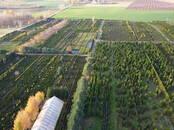 Lauksaimniecība Sēklas un stādi, cena 12 €, Foto