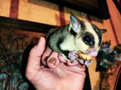 Dzīvnieki Eksotiskie dzīvnieki, cena 320 €, Foto