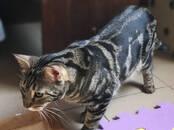 Кошки, котята Беспородная, цена 40 €, Фото