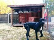 Dzīvnieki Dažādi, cena 95 €, Foto