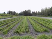 Сельское хозяйство Семена и рассада, цена 0.20 €, Фото