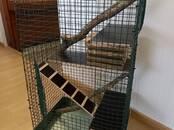 Грызуны Клетки  и аксессуары, цена 74 €, Фото