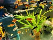 Fish, aquariums Fish, price 1.49 €, Photo