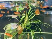 Zivtiņas, akvāriji Zivtiņas, cena 1.48 €, Foto