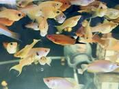 Рыбки, аквариумы Рыбки, цена 1.49 €, Фото