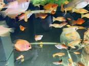 Zivtiņas, akvāriji Zivtiņas, cena 1.49 €, Foto