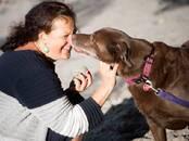 Собаки, щенки Приюты и гостиницы, цена 7 €, Фото