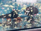 Zivtiņas, akvāriji Zivtiņas, cena 1.78 €, Foto