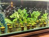 Рыбки, аквариумы Водные растения, цена 10 €, Фото