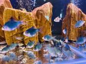 Рыбки, аквариумы Рыбки, цена 1.39 €, Фото