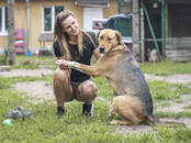 Dogs, puppies Outbred, price 1 €, Photo