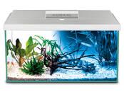 Fish, aquariums Aquariums and equipment, price 86 €, Photo