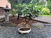 Home plants Bonsai, price 120 €, Photo