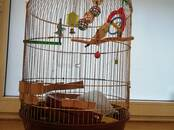 Parrots and birds Cages and accesories, price 25 €, Photo