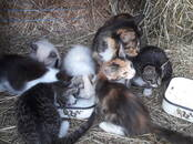Cats, kittens Unknown breed, price 0.01 €, Photo