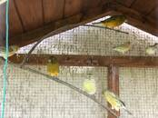 Parrots and birds Canaries, price 15 €, Photo