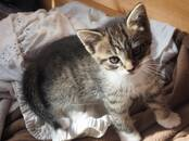 Cats, kittens Outbred, price 10 €, Photo